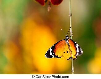 Closeup butterfly on flower blossom - Closeup macro photo of...
