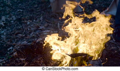 Outdoor wood campfire burring brightly at forest late...