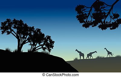 Silhouette of tree and giraffe in savana