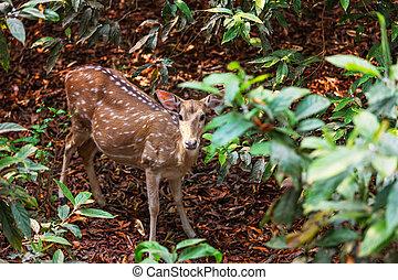 Spotty deer on road