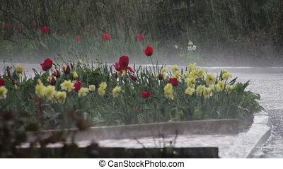 regna, stjärnfall, hårt, In, grön, Parkera,