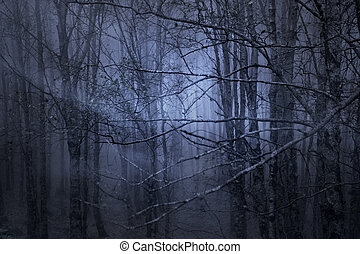 Magic foggy forest at dusk