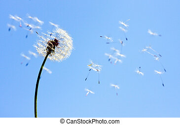 Dandelion on blue sky