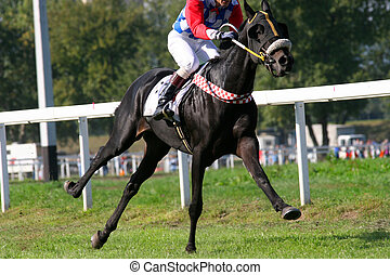Gallop - Thoroughbred galloping, just one leg on the ground