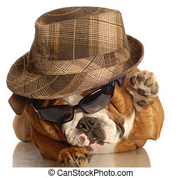 bulldog dressed up like gangster with hat and sunglasses