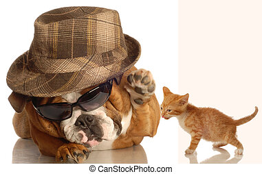 cook dog and cat - english bulldog dressed up in glasses and...