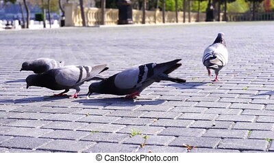 Hungry pigeons bird swarming the loaf of bread