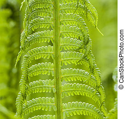 beautiful fern at the meadow symbolizes contact