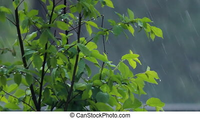 heavy rain - green bush under heavy rain