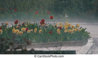 Rain Storm in the Park - Heavy rain, storm, downpour in the...