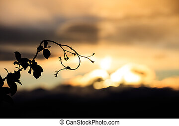 Close-up of branch against of skyscape - Silhouette of...