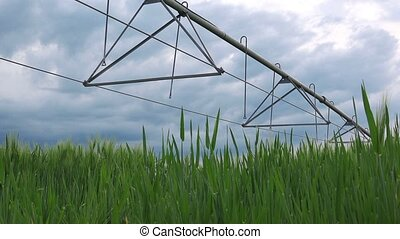 Wheat field and irrigation - Dolly slider shot of green...