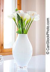 Zantedeschia aethiopica - Lily of the Nile Zantedeschia...
