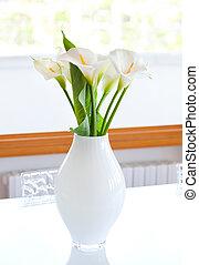 Zantedeschia aethiopica - Lily of the Nile (Zantedeschia...