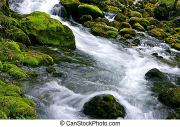 Forest Stream - Forest stream running over mossy rocks