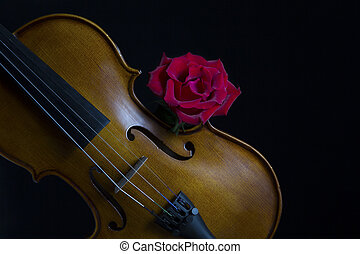 Low key violin and rose flower soft lighting - Low key...