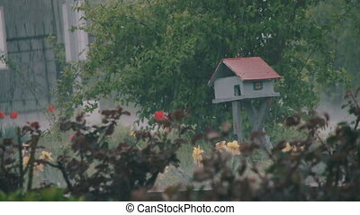 Rain Falling Hard in Park on Little Wooden House - Heavy...