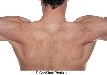 Mans back - A mans back with his muscles flexed.