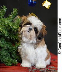 christmas puppy - shih tzu puppy sitting beside christmas...