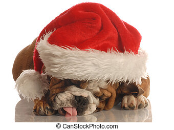 english bulldog wearing santa hat