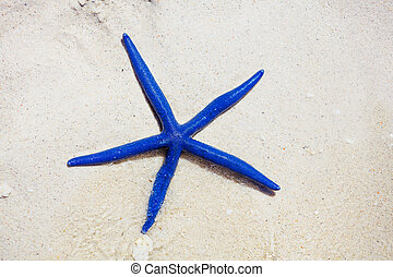 Blue star fish - Blue starfish on the white tropical beach