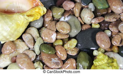 Sea Pebbles and Seashells Rotate