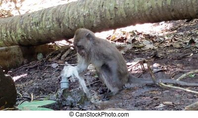 Monkey tries to stop the water in the hose