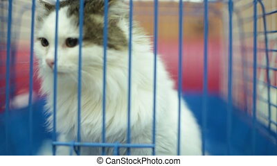 Kitten act attentive. Inside animal shelter cage waiting for...