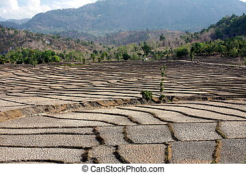 ASIA EAST TIMOR TIMOR LESTE LOIHUNO RICEFIELD - the...