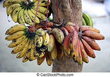 ASIA EAST TIMOR TIMOR LESTE DILI MARKET - bananas at the...