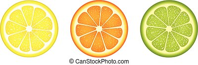 Citrus fruit slices - Scalable vectorial image representing...