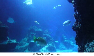 Underwater Fish And Sting Ray - Underwater footage of fish...