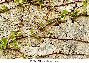 old wall texture for background use - old wall with green...