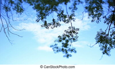 Beautiful blue sky with white clouds and green tree branches on foreground