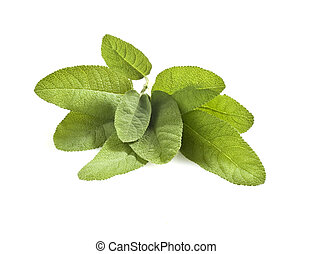 sage - some sage leaves on white background