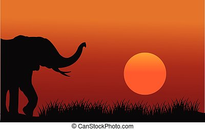 Beautiful elephant in hill scenery at the afternoon
