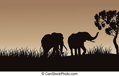 African elephant walking of silhouette with gray backgrounds