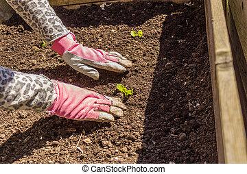 Frau bei Gartenarbeit Frhling, Garten, Gartenarbeit,...
