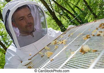 apiculturist