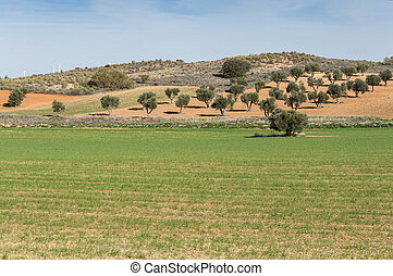 Agricultural mosaic landscape in Toledo Province, Spain