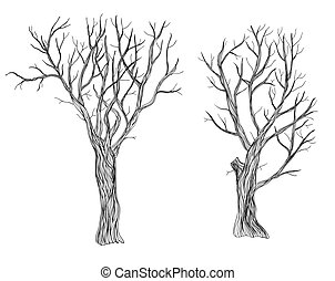 Trees - Two hand drawn bare trees on white background