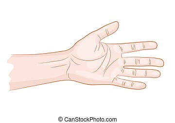 man hand isolated vector illustration