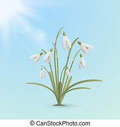 Snowdrop flowers, spring background.
