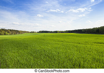 field in spring - an agricultural field in the spring...
