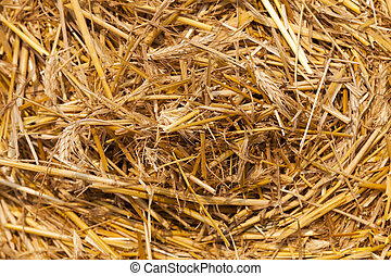 stack of straw in the field - Agricultural field on which...