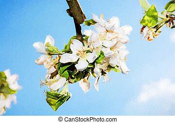 florescendo, cereja, ramo, e, azul, céu,...