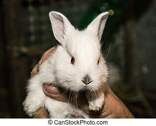 Beautiful white rabbit in the hand Animal portrait Big ears...