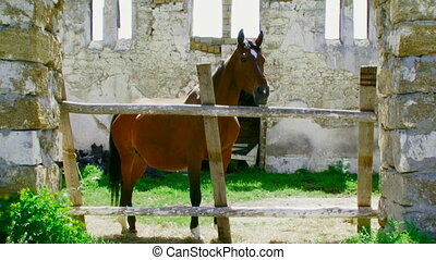 A horse stands in the stalls - The horse stands in the...