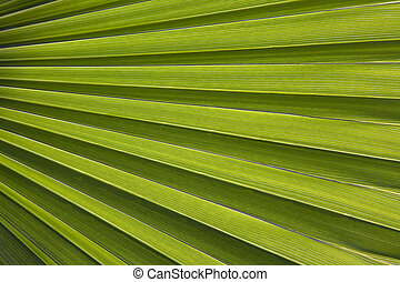 Palm leaf in back light - Close-up of palm leaf in back...