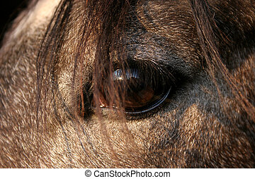 Horse Eye - Closeup of a horses eye